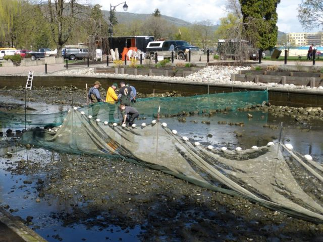 Setting Nets for Polson Pond Kids free fishing weekend
