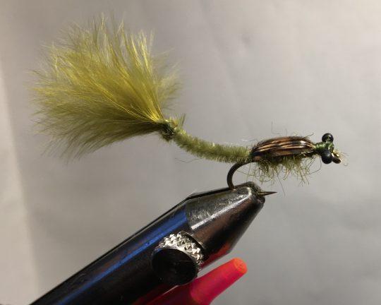 Bug Eyed Damsel