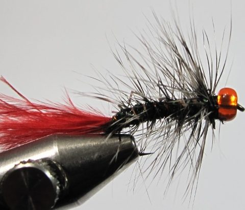 Red Tail Woolly Bugger