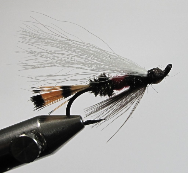 Royal Coachmen Steelhead