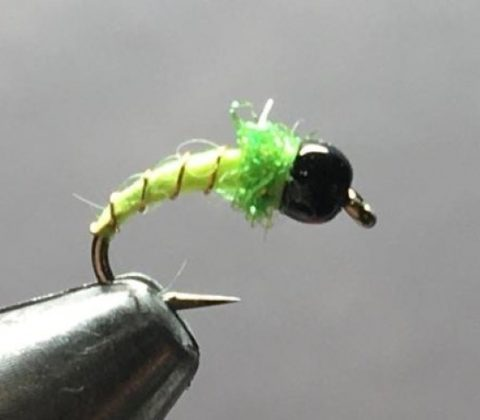 Chartreuse Chironomid